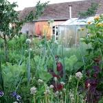 Gartenimpressionen_1